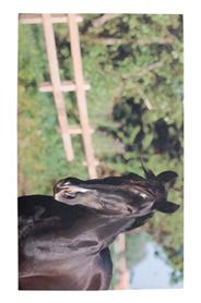 Lovas lábtörlő - Cipős szőnyeg, 75 x 45 cm RB99