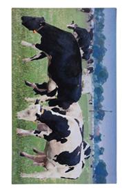 Bocis lábtörlő - Cipős szőnyeg, 75 x 45 cm RB93